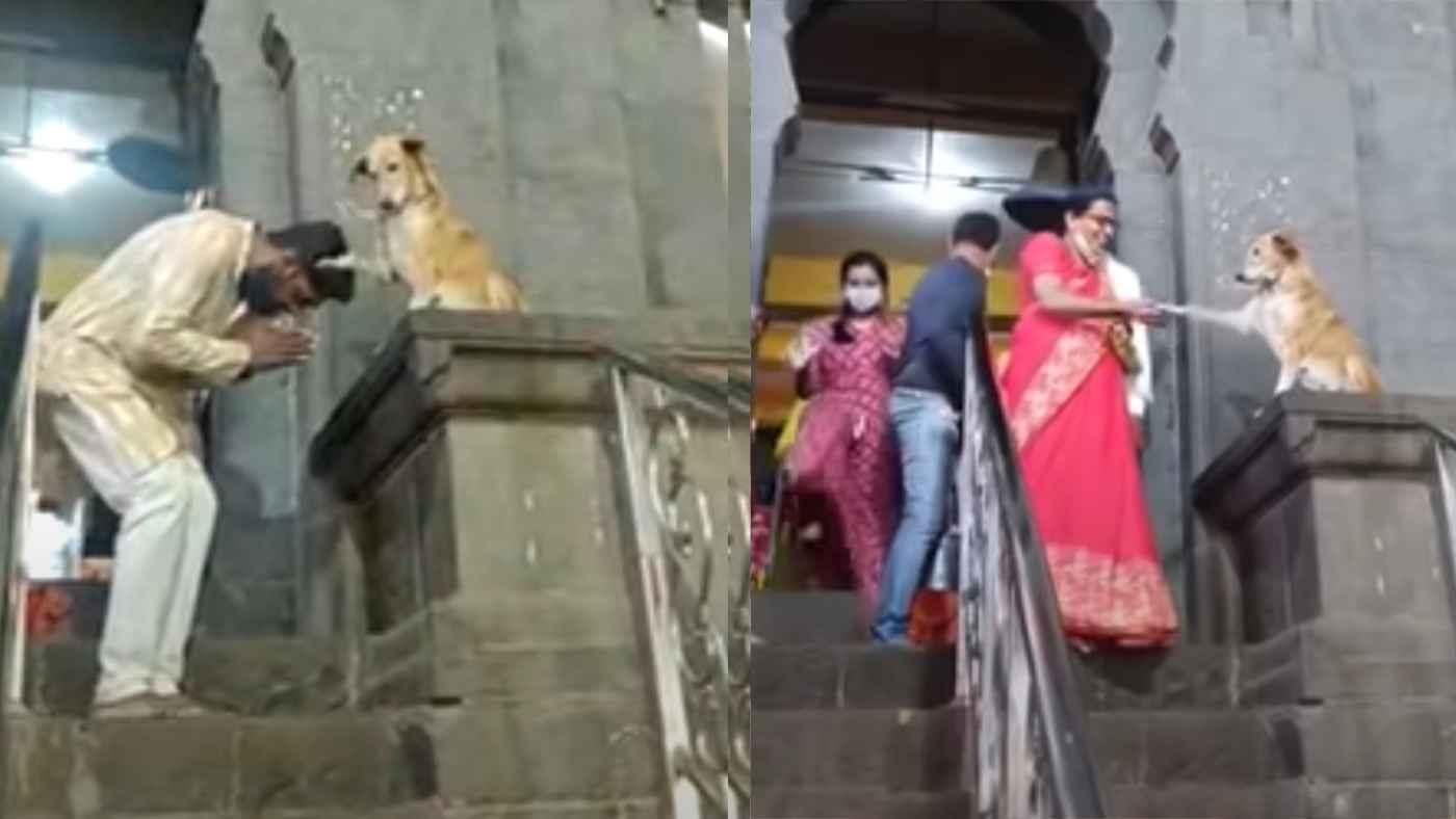 「彼が本物の神なんだ」寺院の前で人々を祝福する犬が話題に!
