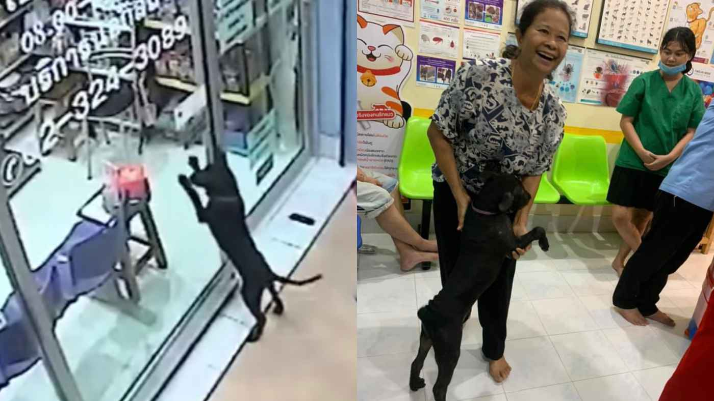 迷子になって家が分からなくなってしまった犬が家に帰るために考えた作戦が賢すぎると話題に!