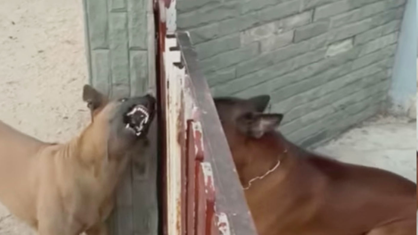 柵越しにすごい勢いで煽り合いしていた犬。しかし柵が開いた瞬間可愛すぎる行動を取って話題に!