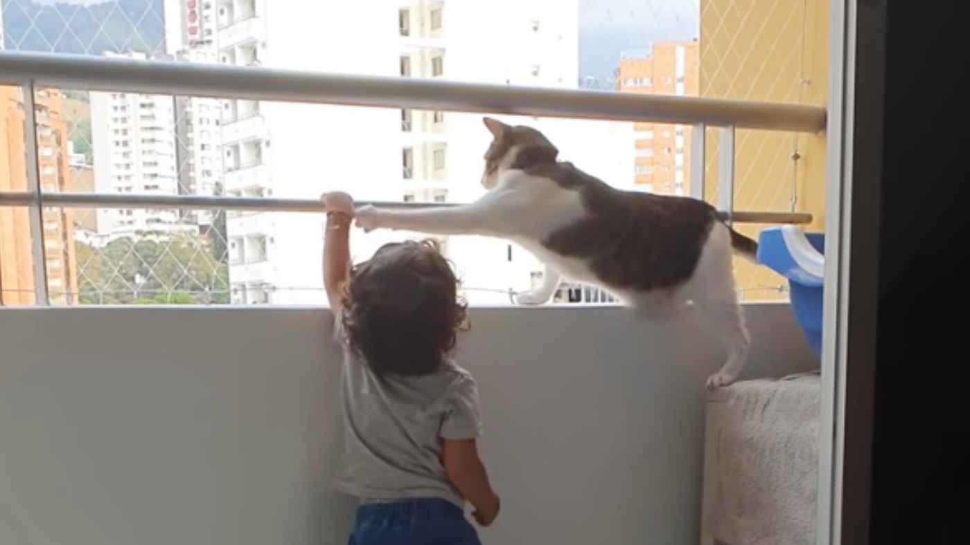 高層マンションで子供を見守る心配性の猫が話題に!