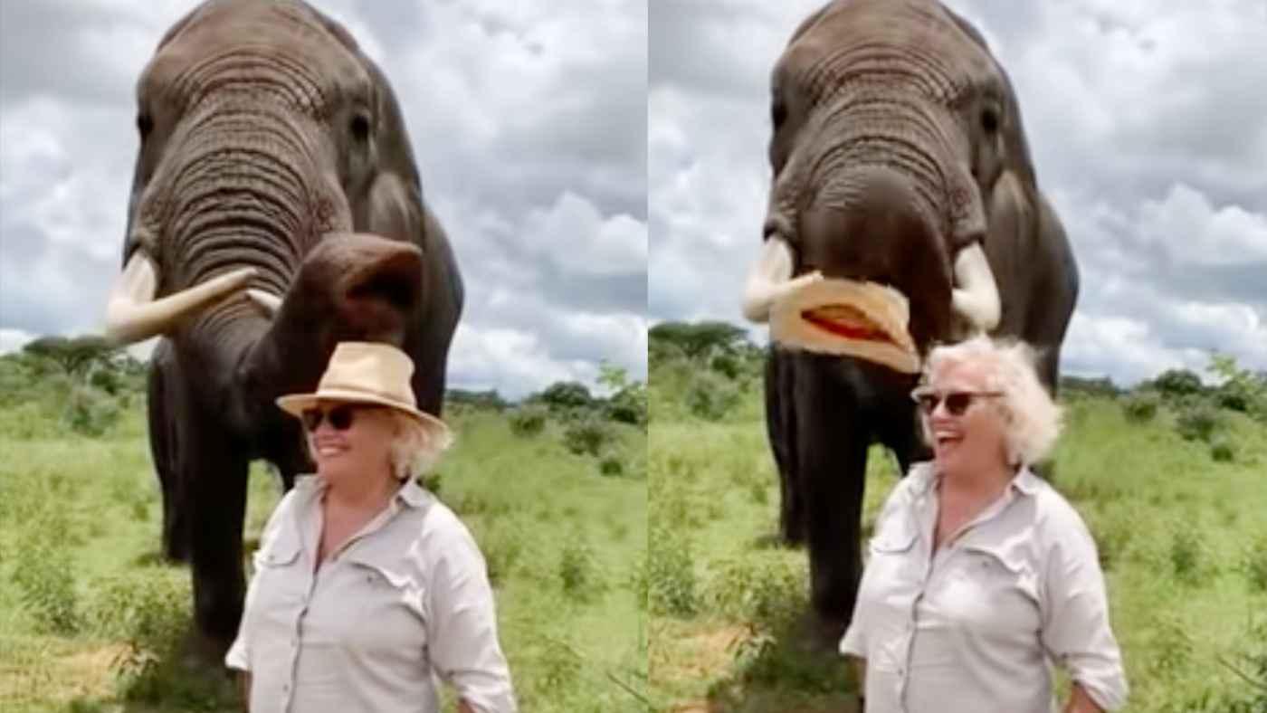 女性の帽子をイタズラで隠したゾウ。その後の行動が「紳士的だ」と話題に!