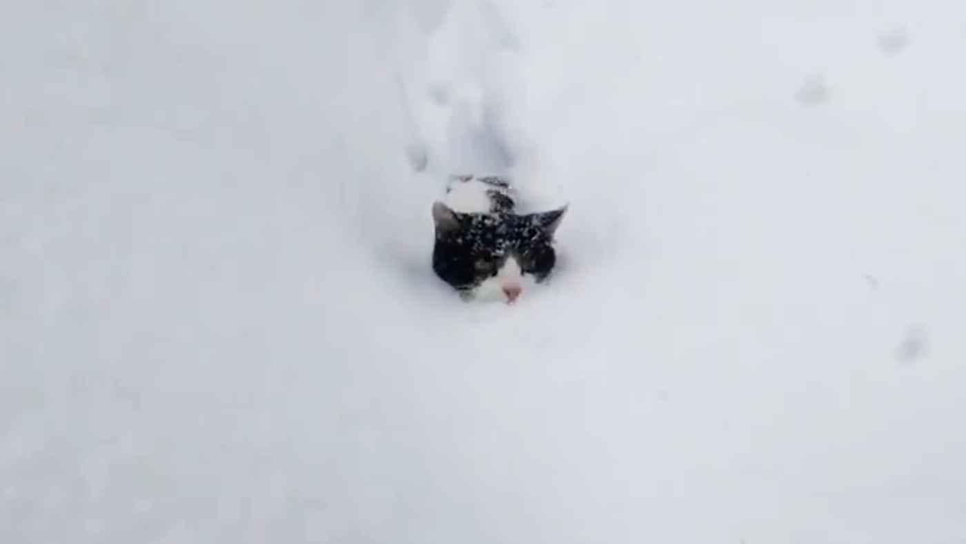 「ラッセル猫だ!」長野県の旅館の除雪車のような猫が大人気に!海外からも驚きの声!