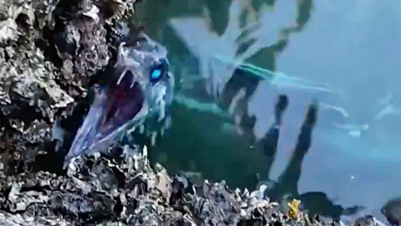 【日本】目が青く光る異形の生物が撮影され話題に!