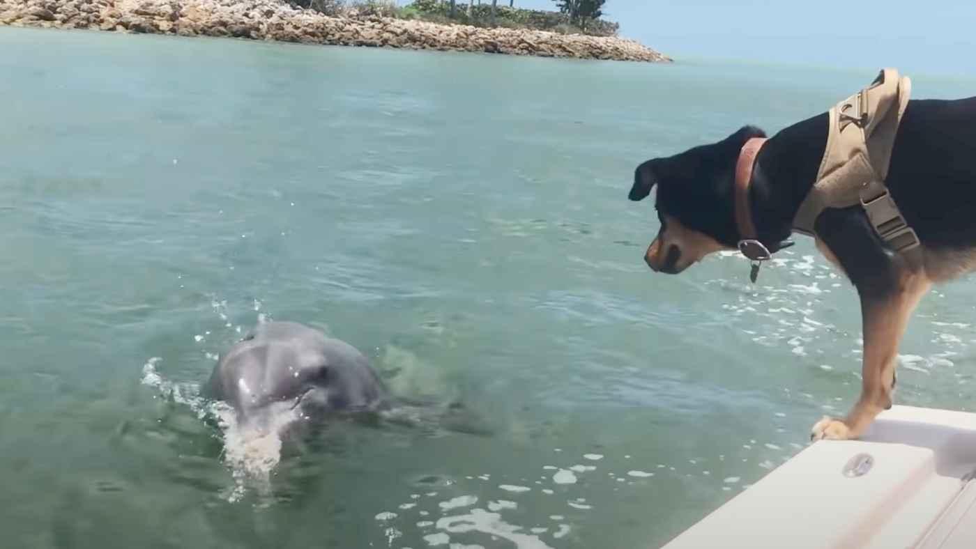 イルカと犬が友達になる瞬間を収めた動画がすごい!