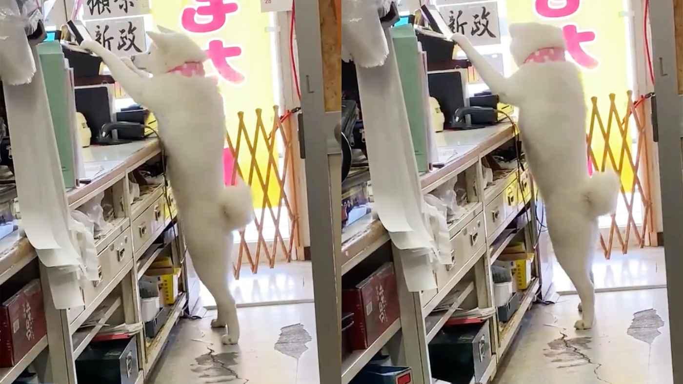 【日本】「着ぐるみ着た人間かと思った!」中に人間が入っているとしか思えない店員犬が話題に!