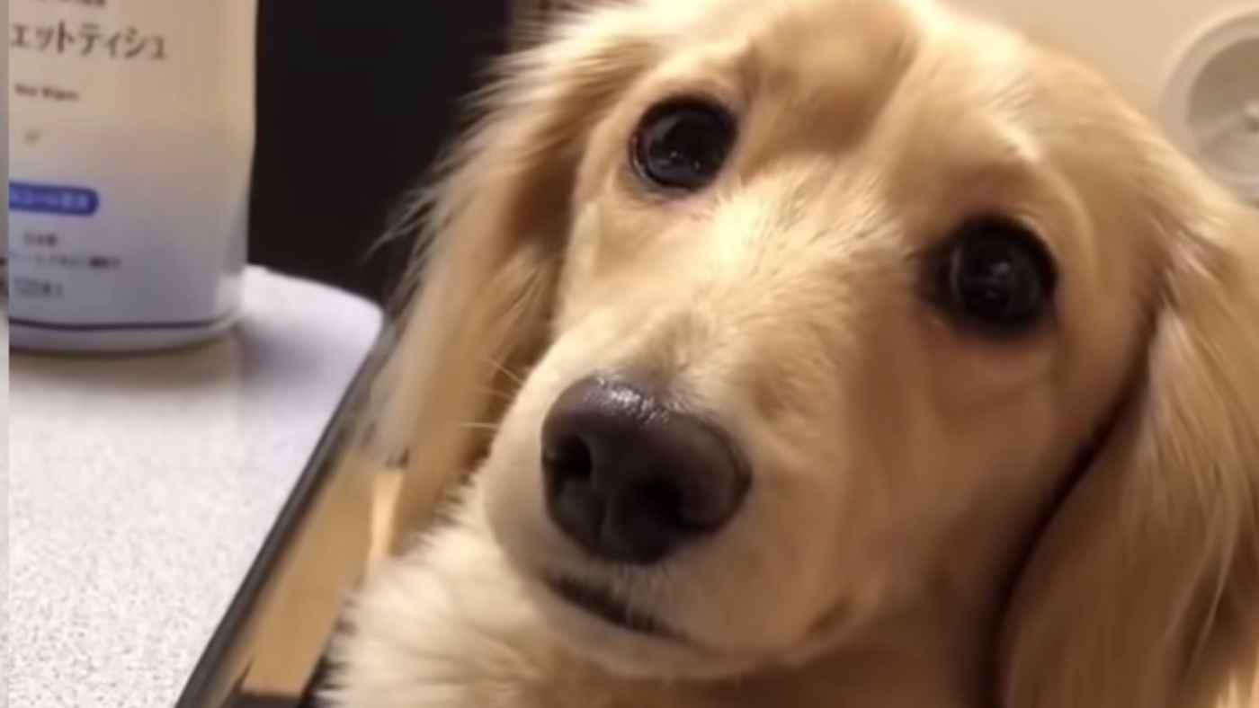 名前を呼んだら可愛い声で「ん?」とお返事!完全に会話が成り立っている、喋る犬が話題に!