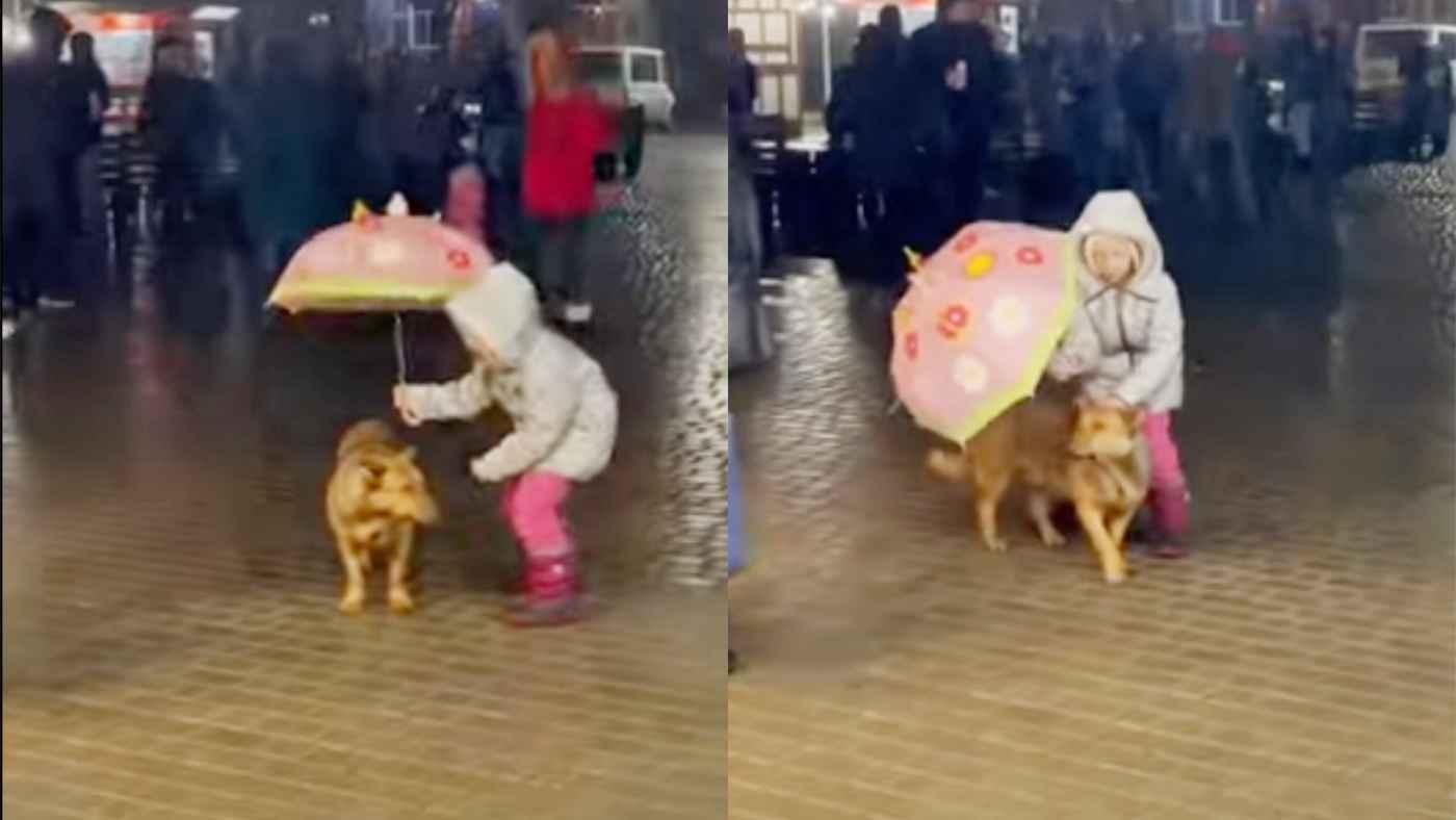 雨に濡れる犬を見た少女の純粋な行動が話題に!
