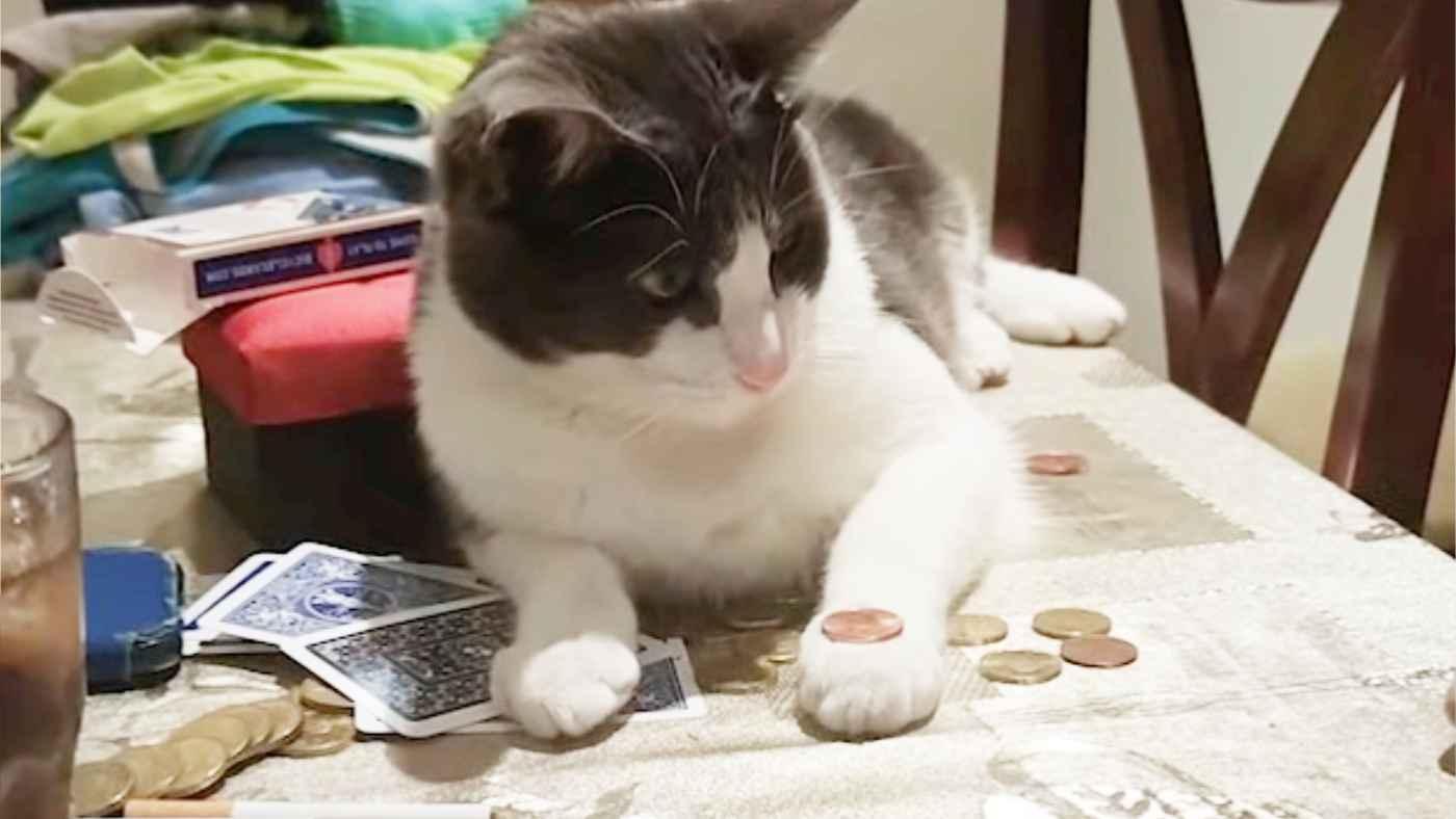 ルールを理解して飼い主さんとゲームをする猫が賢すぎると話題に!