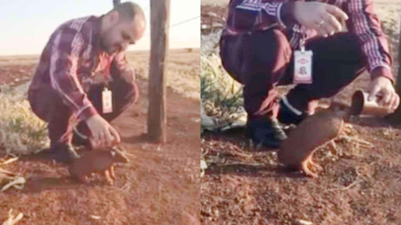 「もっとちょうだい!」山火事から避難してきたアルマジロの赤ちゃん。水を与えるとごくごく飲んでみるみる元気に!
