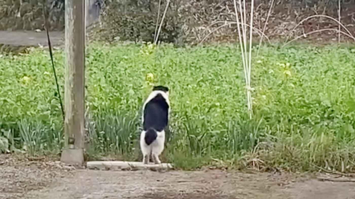 「猫がうちの庭でなんかしてたんだけど笑」猫が庭でやっていた行動が謎すぎると話題に!