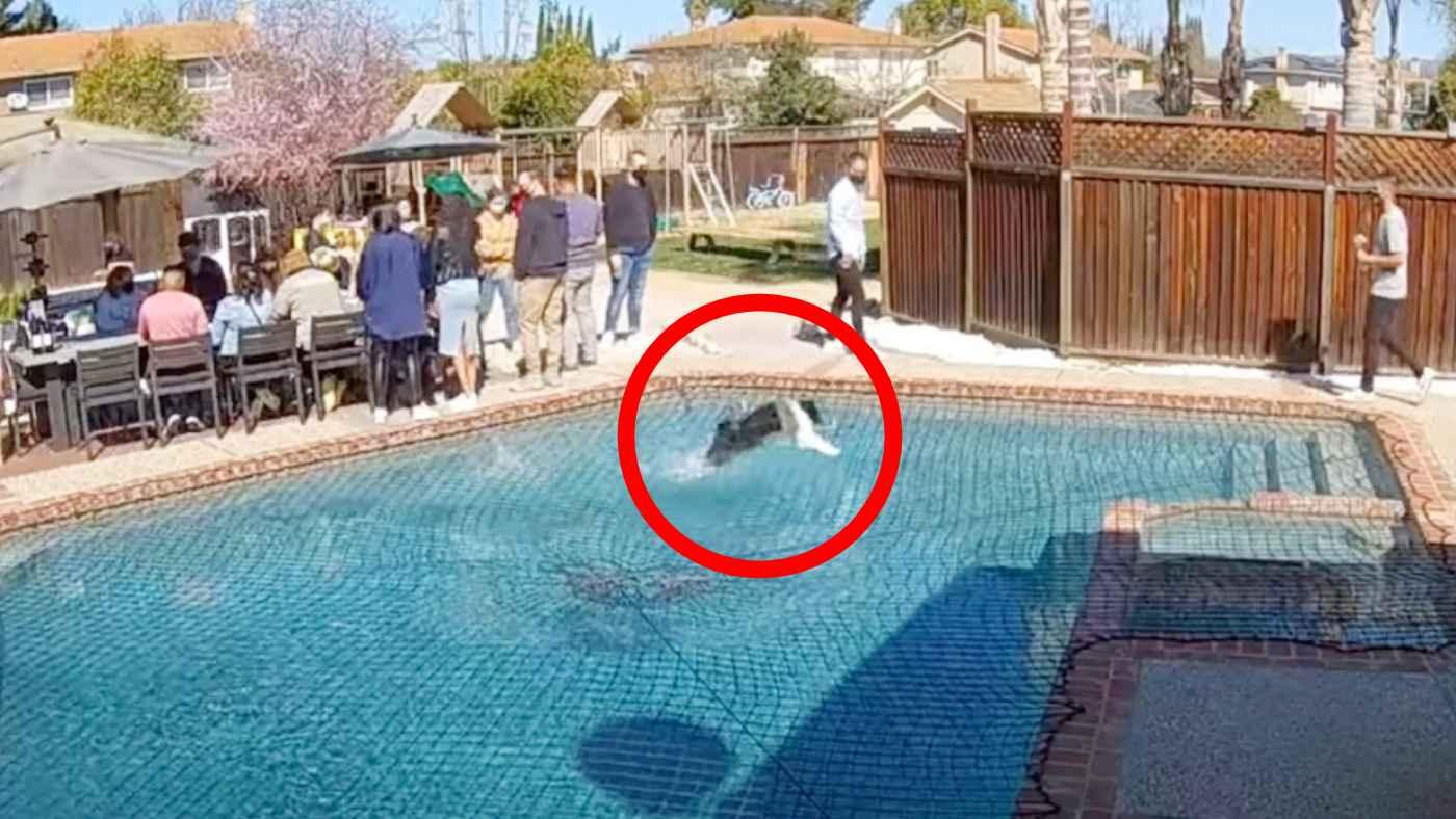 忍者のように水上を走る犬が凄すぎると話題に!その場にいた全員が驚き!