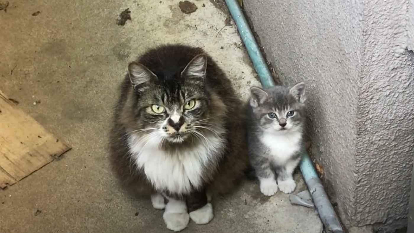 「この子をよろしくお願いします」それまで人間を信用せず手を焼いていた野良母猫が子猫を託しに来た!