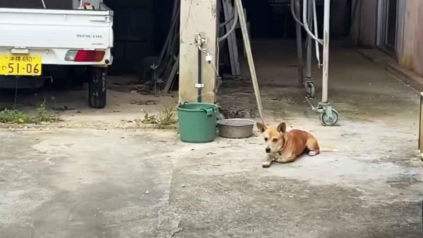 【沖縄】亡くなったおじいさんを独りで待ち続けていた健気な犬