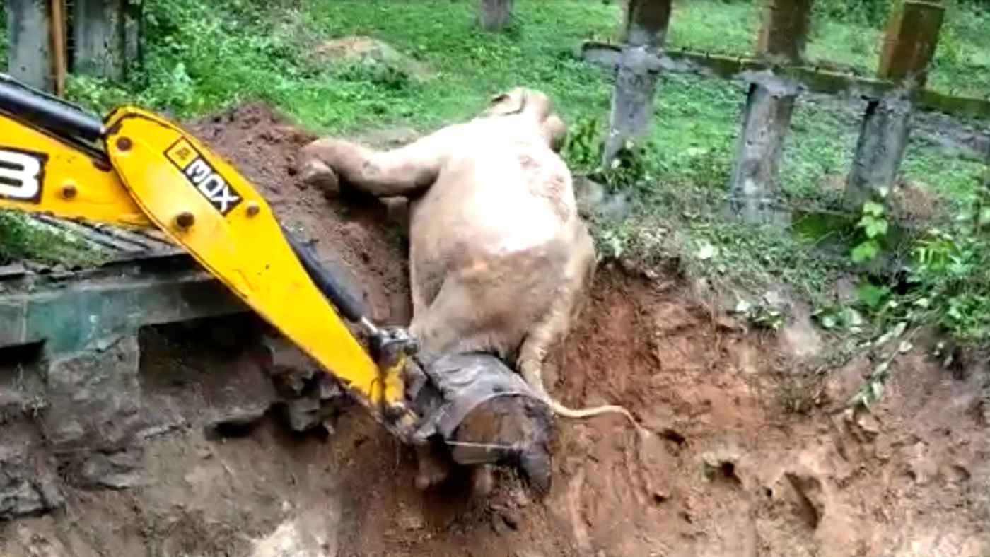 「助けてくれてありがとう」穴に落ちた子象を助けたショベルカー。ショベルカーに感謝を伝える姿が可愛すぎると話題に!