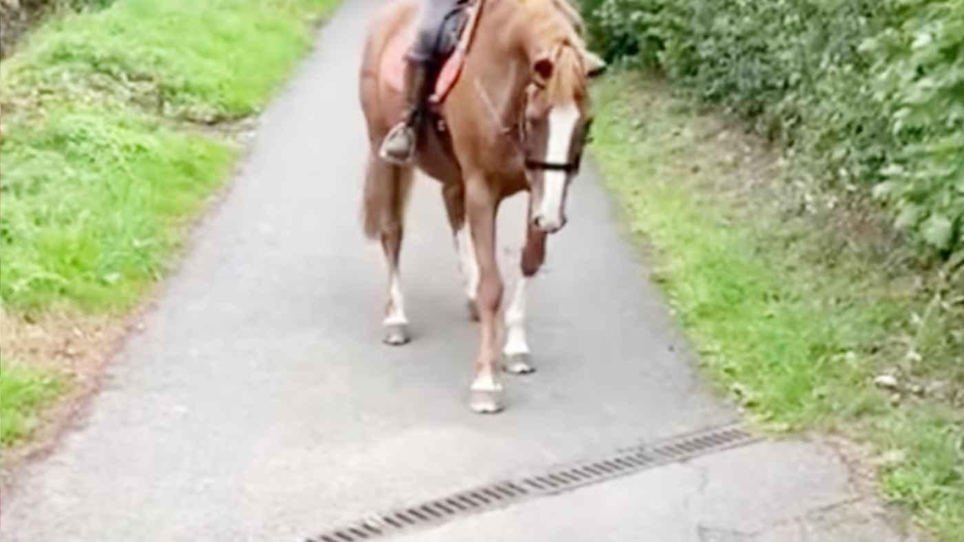 排水溝が怖くて前へ進めない馬が、勇気を振り絞ってとった作戦が可愛すぎると話題に!