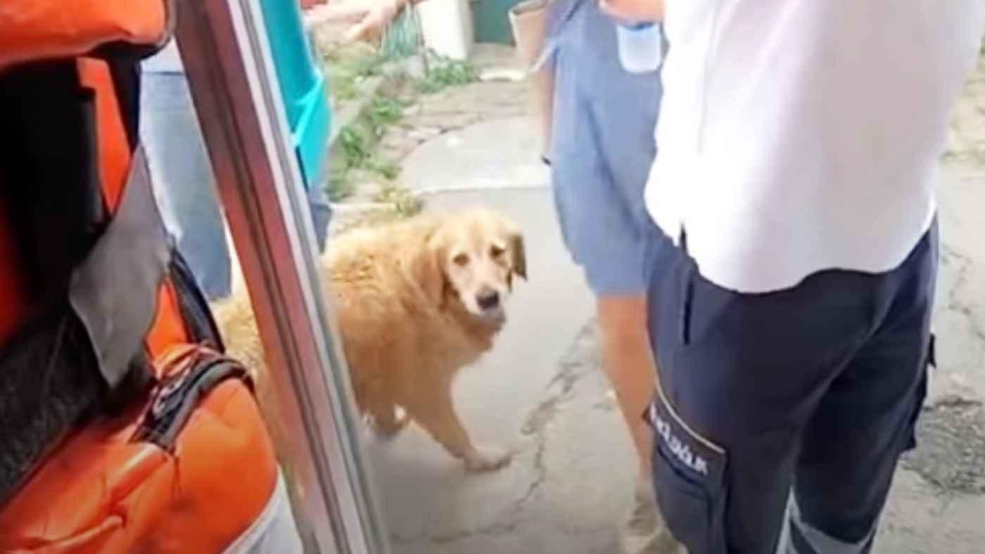 救急車で運ばれる飼い主さんを心配したゴールデンレトリバーの行動が話題に!