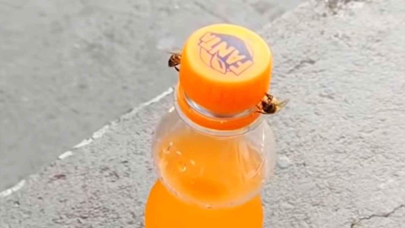 「信じられない知性だ」2匹のミツバチが協力して閉まっているボトルのフタを開ける様子が世界中で話題に!