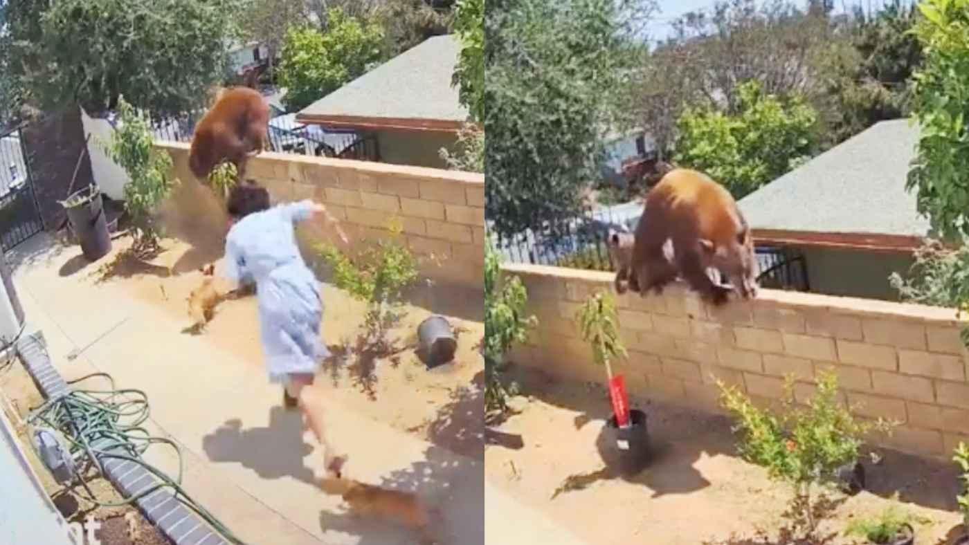 庭に侵入した大きな熊。17歳の少女が犬を助けるために取った行動が凄すぎると世界中で話題に!