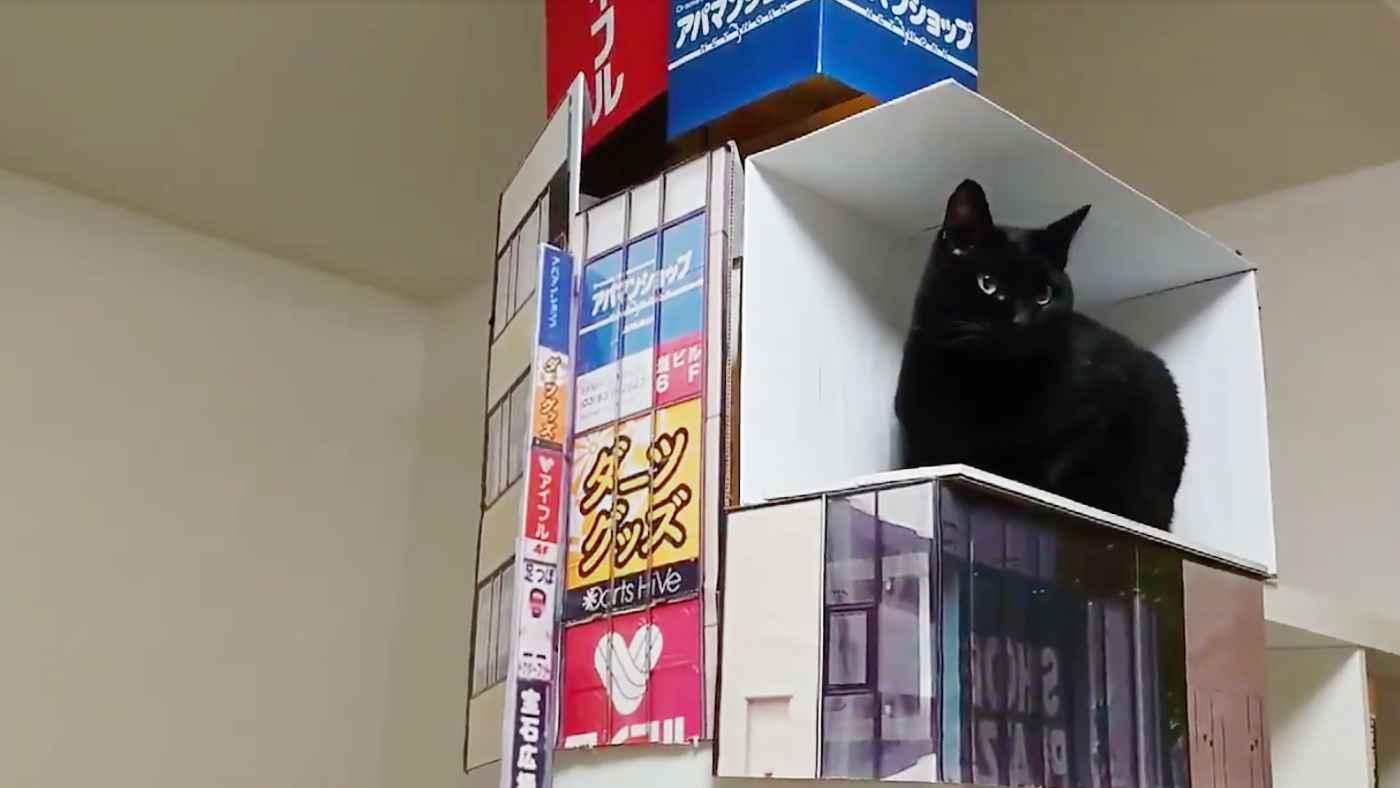 「うちの猫もかなり飛び出して見える」新宿の街頭ビジョンの巨大猫並に飛び出た猫が話題に!
