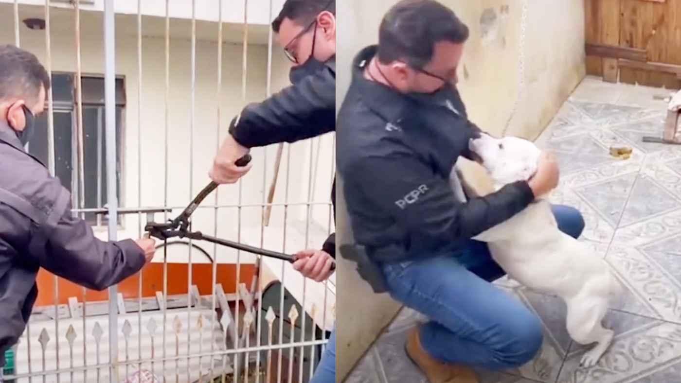 飼い主のいない間に犬を救出!この喜び方を見ると、今までどれだけ孤独な日々を送っていたのか分かって心が痛む