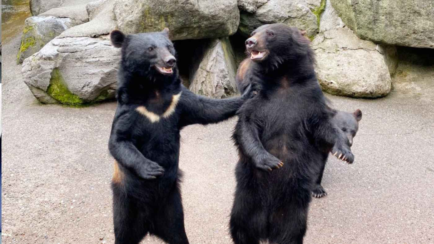 山で「オーイ」とおじさんの声がしても近づかないで!小熊の鳴き声が「中年男性の声」にそっくりだと注意喚起動画が話題に!