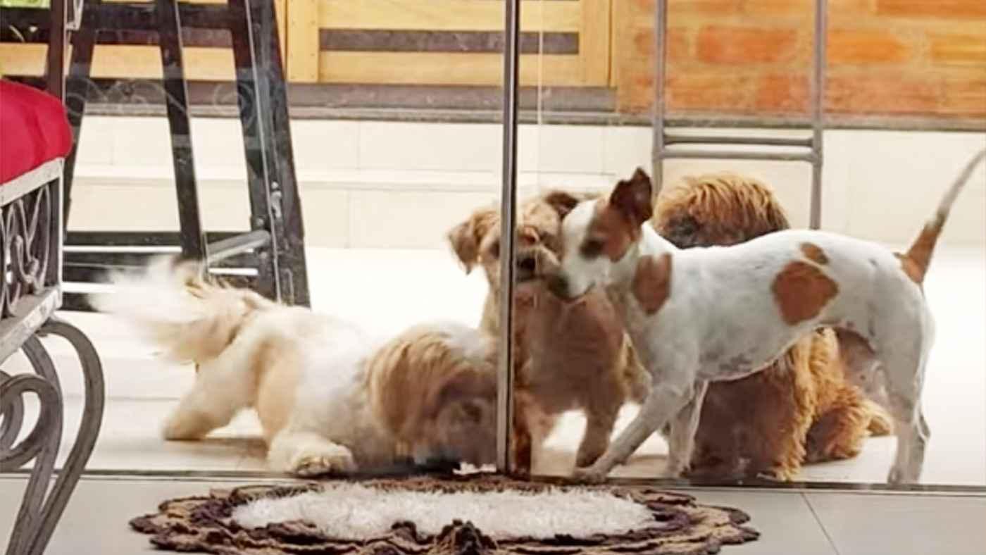 犬たちが凄いチームワークで大脱走する姿がアニメのワンシーンのようで可愛すぎると話題に!