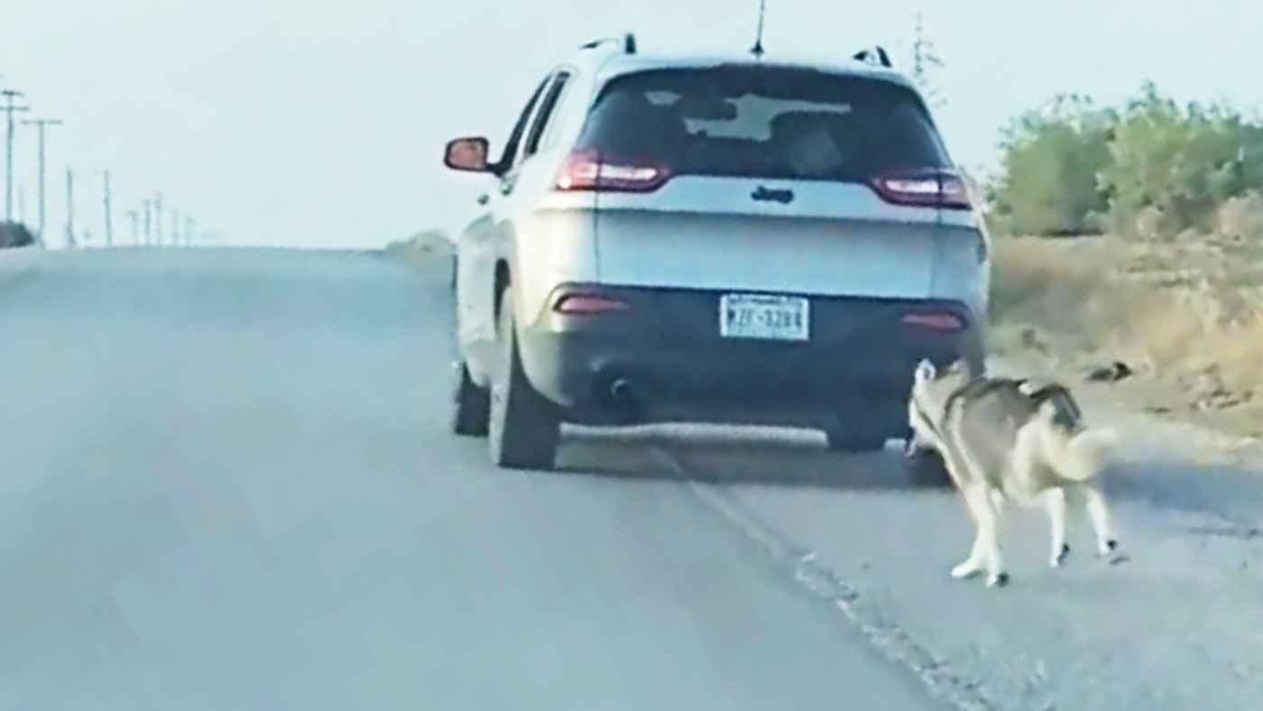 「お願い、そんなに速く行かないで!」路上に犬を置いて無情にも走り去る飼い主。しかし犬には幸運が待っていた。