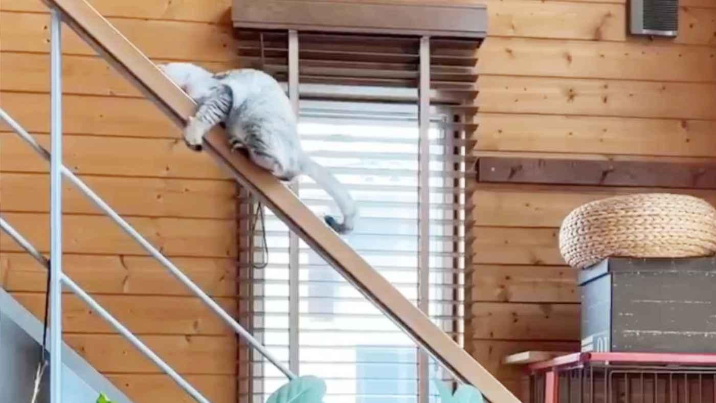 「小学生みたい」最高に可愛い階段の降り方をする猫が話題に!