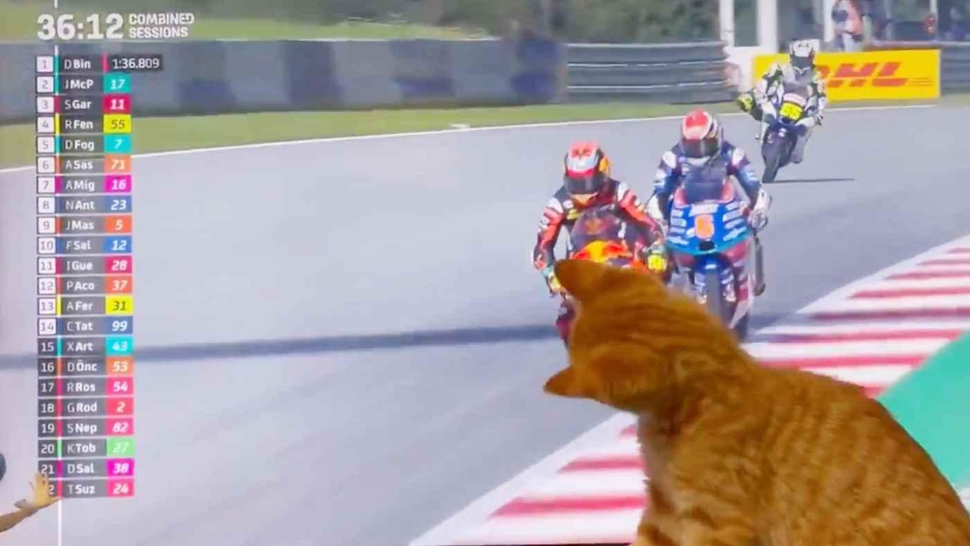 「うちの猫が大変失礼いたしました」猫のせいでバイクレースがめちゃくちゃになってしまう動画が話題に!