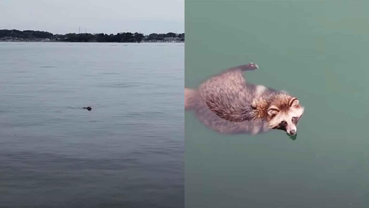 【日本】釣り中にタヌキが助けを求めて泳いできて凄い方法で救助!お礼を言って帰っていった!