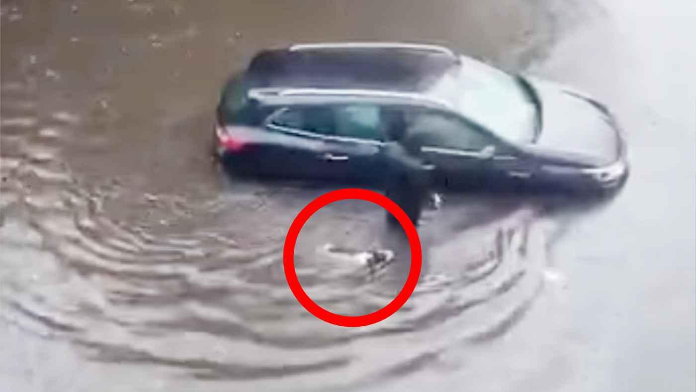 飼い主さんとともに水没し人が閉じ込められた車を助ける犬が話題に!