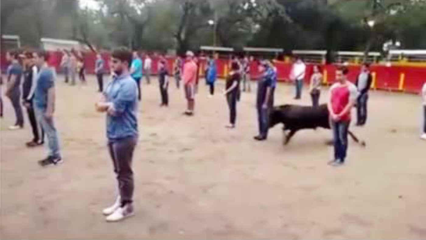 「牛は本来優しい動物なんだよ」雄牛に突撃されない方法がすごい!