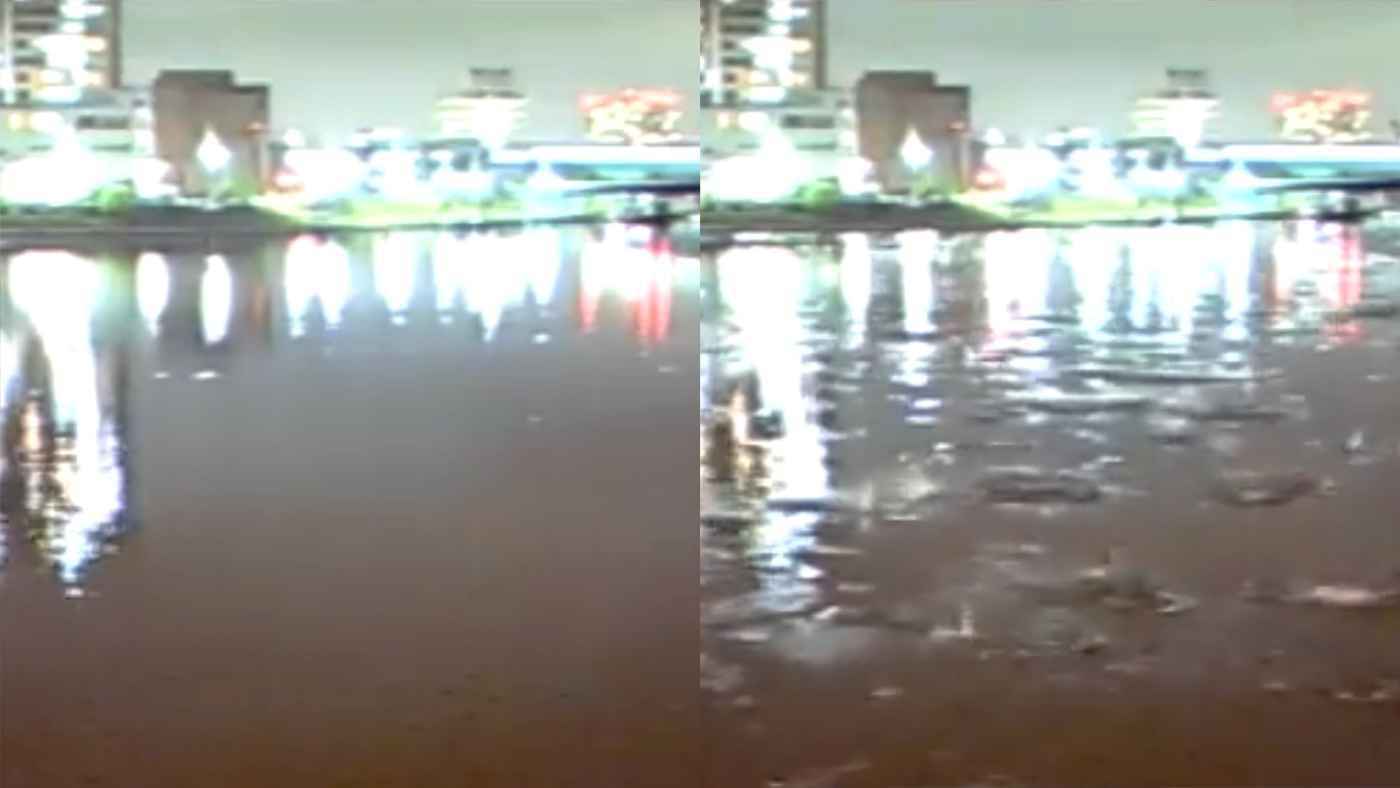 【東京】先日の地震直前、一斉に飛び跳ねる魚や鳥たちの姿がすごすぎると話題に!