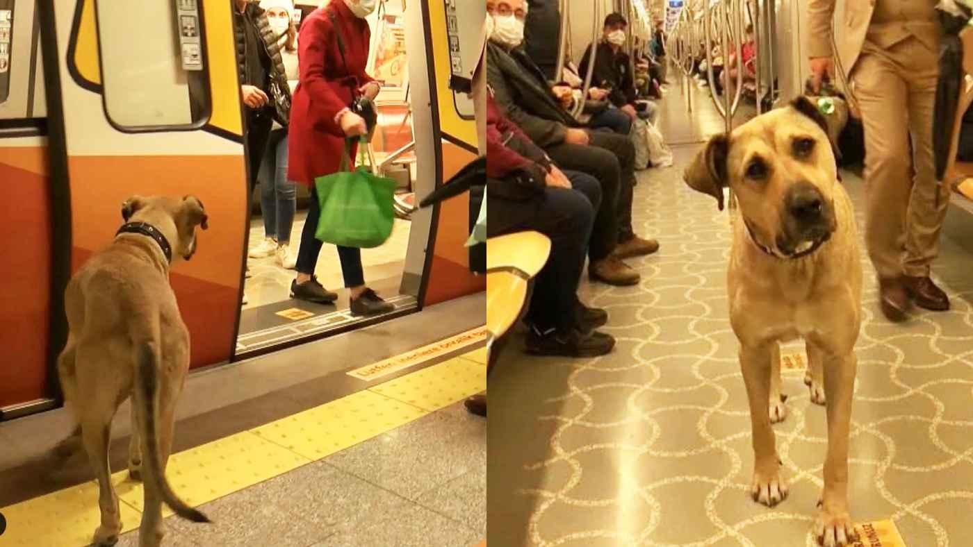 【神対応】交通機関を普通に乗りこなして生活する野良犬が大人気に!鉄道機関の特別対応に心温まる!
