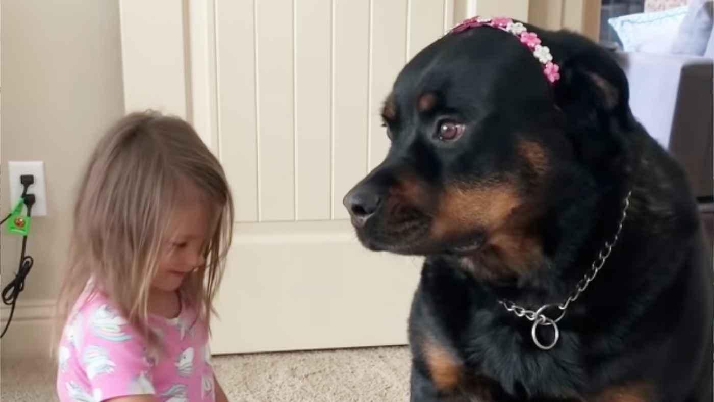 早朝から娘さんのちょっと無茶なおままごとに付き合ってあげる犬が話題に!優しい眼差しが素敵!
