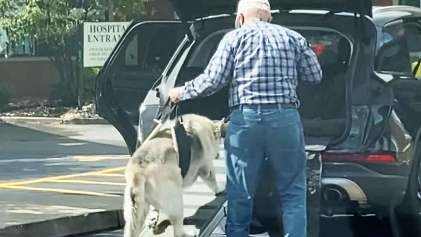 「永遠の親友だ」自分も大変そうなのに老犬を優しく労わるおじいさん。一緒に歳を重ねた変わらない愛が感動的だと話題に!