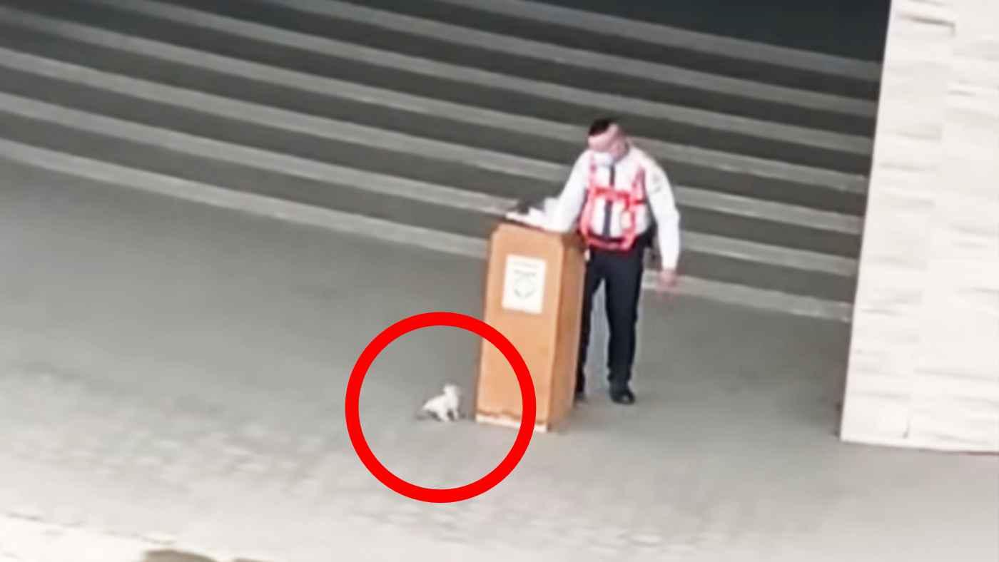 警備員さんをおちょくる遊び盛りの子猫。警備員さんの優しさが滲み出た対応が話題に!
