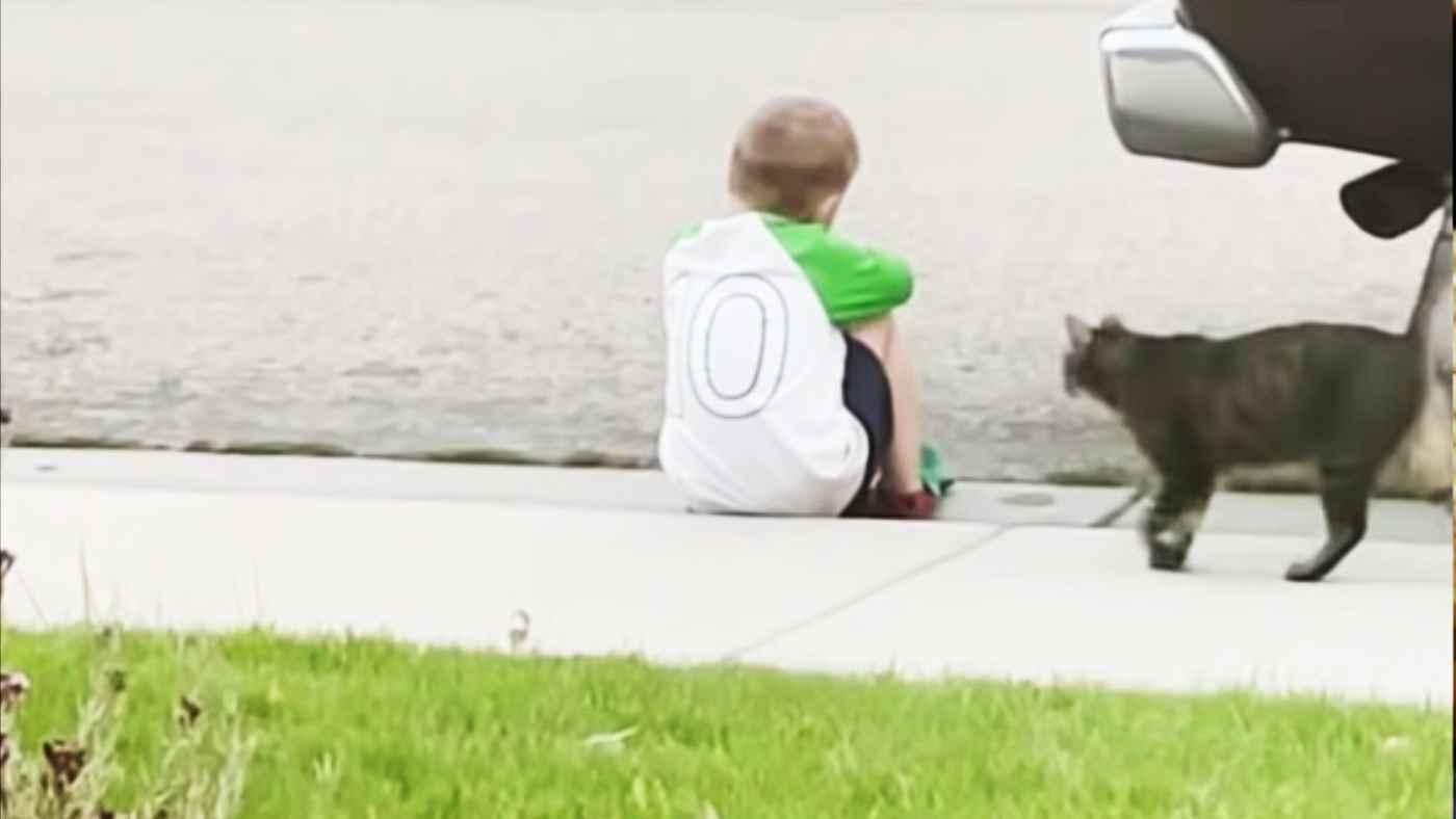 悲しみに暮れていた少年を見た近所の野良猫の行動と少年の友情が美しいと話題に!